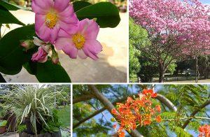 RUAY ต้นไม้อัปมงคล ห้ามปลูกไว้ในบ้าน ทำให้โชคร้ายตลอดทั้งปี