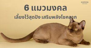 RUAYเผยแมวไทย 6ชนิด เลี้ยงไว้มีแต่เรื่องดีๆ นำโชคลาภมาให้เจ้าของ