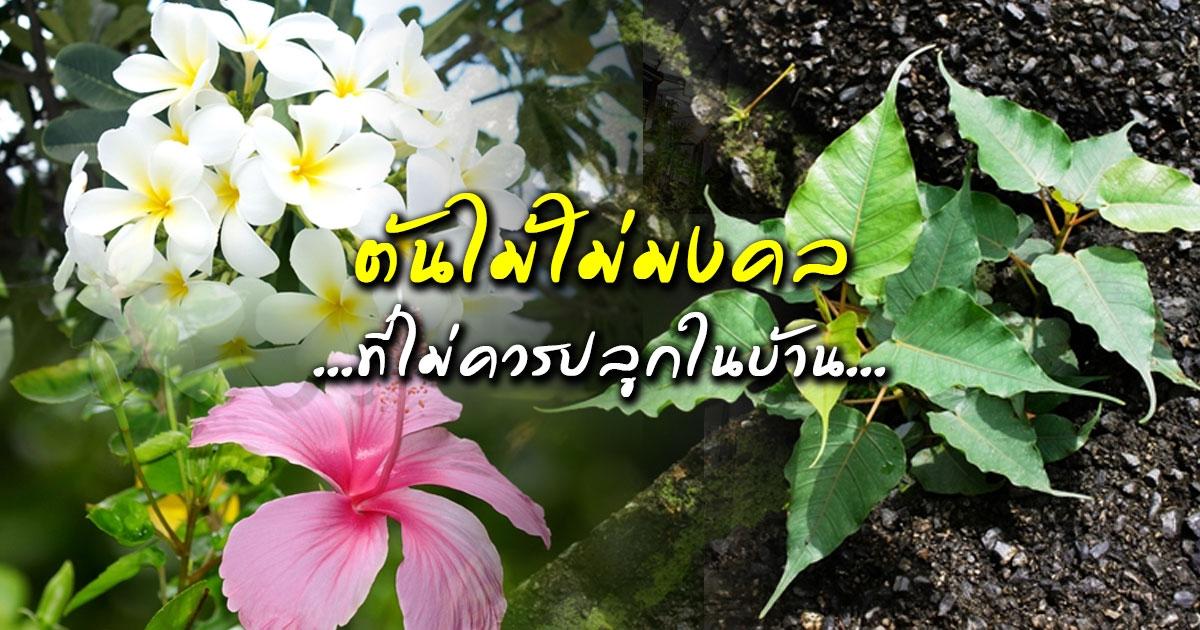 Read more about the article RUAY ต้นไม้อัปมงคล ห้ามปลูกไว้ในบ้าน ทำให้โชคร้ายตลอดทั้งปี